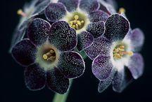 Flowery flowery~~