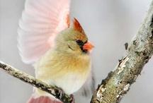 Birds are freedom