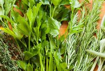 scarborough fair magical herbs