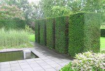 Taxus / Bytte fra ønskede buksbom til taxus - kuler i hagen