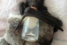 Beautiful Bats / by Queen Jenevere