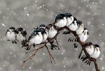 Birds of a Feather - Adorable / Flock together! / by NexTrend Design (Ellie Hanson)