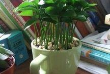 Plantas, Cultivo e Decoração