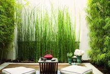 magical garden spaces