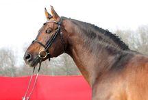 Beligneux Le Haras / Stallions Manager