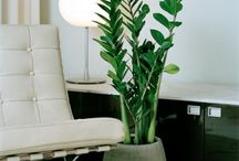 :: living green X home :: / beautiful plants + interior green compositions / by FIVEbyLN