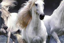 Atlar Horses