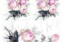 grafika róże