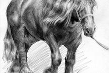 Rysunki koni / Rysunek ołówkiem, konie.