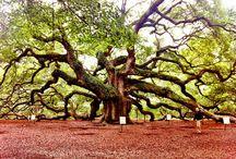 Charleston South Carolina / by Susan Walters
