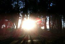 Sweet Home / L'odeur des pins, le bruit de la mer et le bleu du ciel. Le Sud-Ouest, mon petit havre de paix.