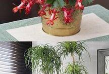 Plant tips