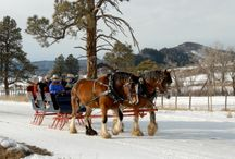 Horse Drawn Sled Rides & Cabin Dinners