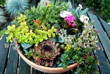 Inexpensive/potted gardens / by Elizabeth Lewis