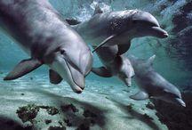 Marine - Dolphins / by Neadeen Masters