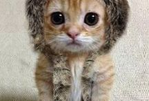 Ben kediden aslan oldum