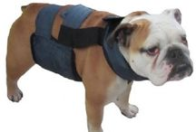 PolarPup™ / Certain breeds and working dogs can suffer in extreme heat.  Our innovative PolarPup™ cooling vests and crate coolers offer effective relief for dogs by targeting their vital organs through cooling their bellies! / by Polar Products