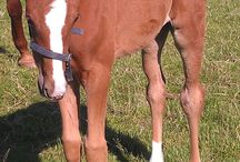 Føl & Plage / Holfelt Horses avler hvert år mellem 1 og 5 føl. Gennem årene er der blevet avlet både spring og dressurheste, men fremover vil der hovedsageligt være fokus på dressurbetonet avl.