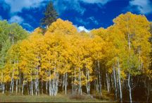 ~Colorful Colorado ~ / We are headed to Colorado to see the Aspens!