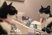 Cat Memes / See lots of cats memes