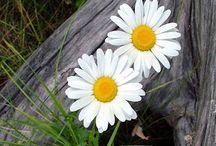 Kukkia ja kasveja