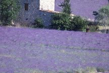 Provence, my dream