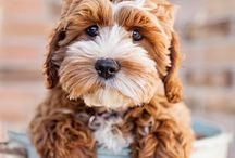 Puppy Love / The day maybe tough but the puppy love is always soft! take a break and meander through the puppies of all ages!