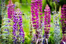 Naturaleza y aire libre / Paisajes, flores, naturaleza en su esplendor.