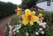 Flowers from my garden.