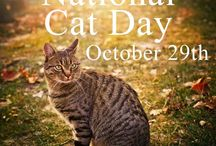 National Cat Day / Celebrate!! A give-away of cat socks!https://www.facebook.com/authorduffybrown