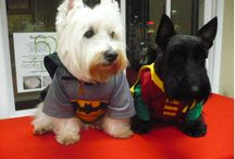 Pet Costumes / Couples Costumes for Pets!