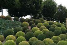 zielone rzeźby ogrodowe