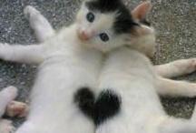Katteelsker <3