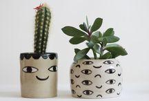 kaktus janusz
