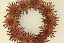 Protea Pods & Cones