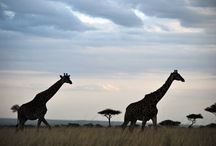 Massai Mara National Reserve in Kenya / There is nothing like being up close to African wildlife!