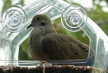 birds / by Karen Stevens