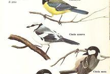 uccelli in giardino