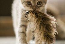 Kittens♡