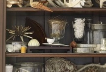Cabinet of Curiosities / by Gardens of the Wild Wild West