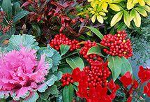 Grow it - winter season / Plant ur pits for winter