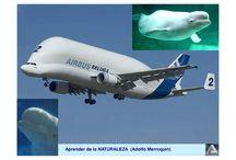 A300-600st Beluga
