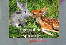 Lief door Carl / Vertederende Nederlandstalige memes