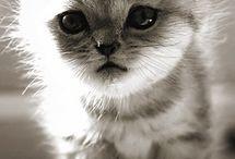 Cute animals  / by Noah Brito