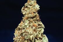 T.H.Seeds® grown by others