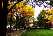 Fall in Love With Fall / The Beauty and Start of the Holidays.