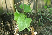Ongedierte planten bestrijden
