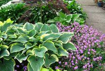 The Secret Garden / Flowers and gardening ideas