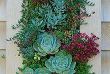 Vertical garden & patio ideas