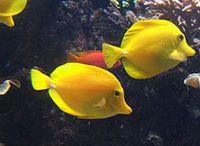 aquarium / by Jessica Rakowitz